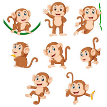 The Collection Of The Monkey P...