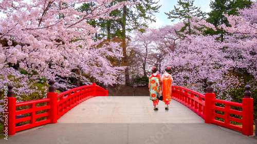 Keuken foto achterwand Asia land Japanese Geisga with Full bloom Sakura - Cherry Blossom at Hirosaki park, Japan