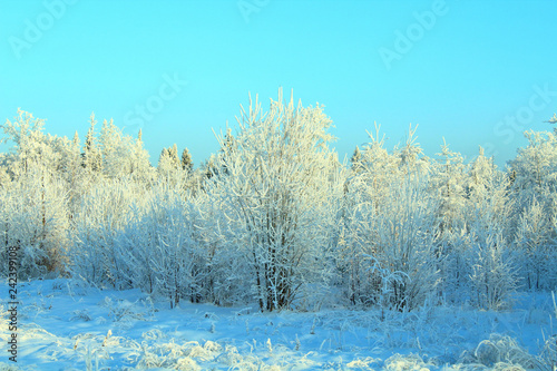 Spoed Foto op Canvas Turkoois Snow-covered white trees. Winter forest. Background. Landscape.