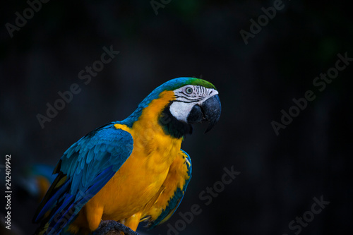 Macaw / macaw blue yellow green white
