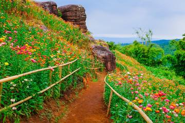 Fototapeta Ogrody Flower garden, winter flower in Thailand, beautiful flower, straw flower. Tulip.