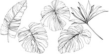 Vector Exotic Tropical Hawaiian Summer. Black And White Engraved Ink Art. Isolated Leaf Illustration Element.