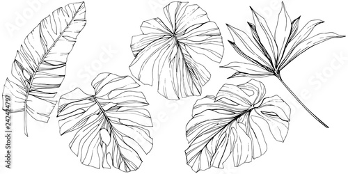 Obraz Vector Exotic tropical hawaiian summer. Black and white engraved ink art. Isolated leaf illustration element. - fototapety do salonu