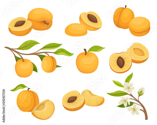 Fotografie, Tablou Flat vector set of apricot icons