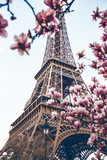 Fototapeta Fototapety Paryż - Blossoming magnolia against the background of the Eiffel Tower