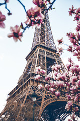 Panel SzklanyBlossoming magnolia against the background of the Eiffel Tower