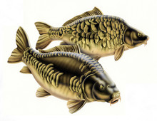 Carp Fish Composition Of Two Fish Isolated On White Background