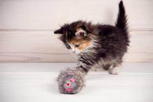 Little Kitten Playing With A T...