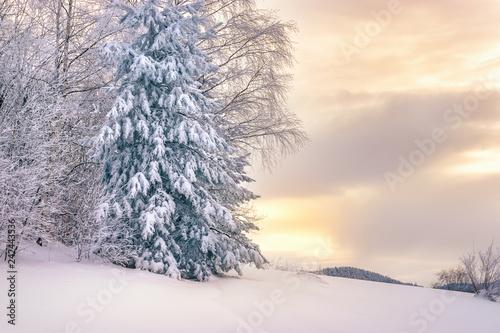 Printed kitchen splashbacks Purple Idyllic winter landscape. Pine tree under the snow in sunset.