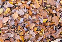 Mixture Of Leaves Fallen In Fo...