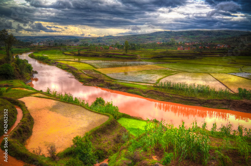 Poster Rijstvelden Landscape with the rice fields and Onive river at Antanifotsy,Madagascar