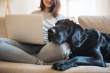 Fototapeta Zwierzęta - A midsection of teenage girl with a dog sitting on a sofa indoors, working on a laptop.