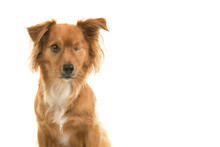 Portrait Of A Pretty Mixed Breed Handicapped One Eyed Dog Isolated On A White Background