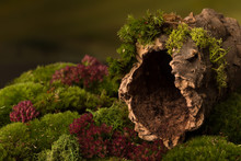 Tree Bark With Hole