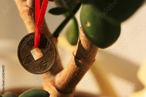 Photo  Chinese coin on a money tree