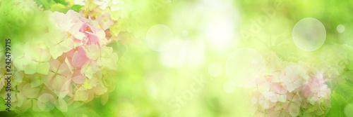 Poster de jardin Hortensia Bright green spring scenery