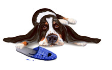 Sad Bored Basset And Old Slipper. Hand Drawn Watercolor