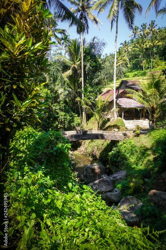 Keuken foto achterwand Asia land Bridge in Gunung Kawi temple, Ubud, Bali, Indonesia