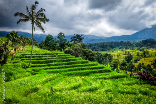 Tuinposter Asia land Jatiluwih paddy field rice terraces, Bali, Indonesia
