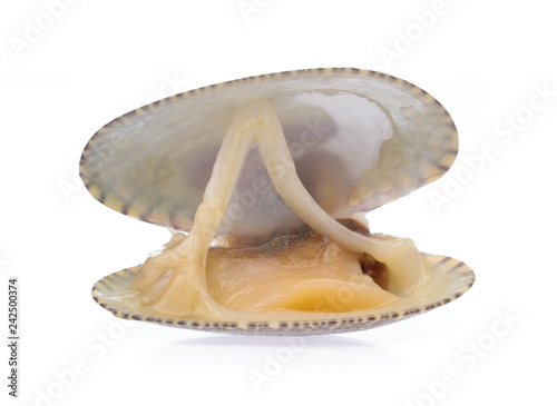 Surf clam isolated on white background Wallpaper Mural