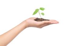 Hand Holding Sapling In Soil I...