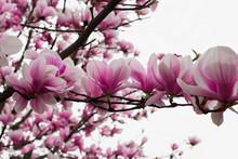 Beautiful Bright Pink Flowers ...