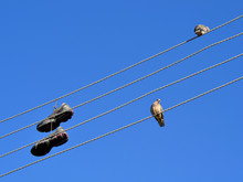 Birds And Sneakers On Wire