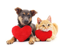 Cat And Dog With Red Hearts.