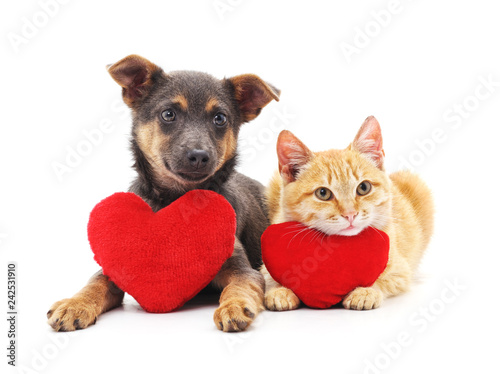 Poster de jardin Chat Cat and dog with red hearts.