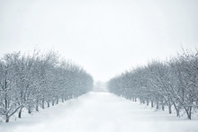 Photograph Of A Rows Of Trees ...
