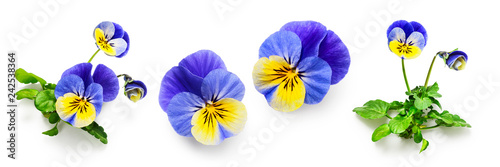 Papiers peints Pansies Pansy viola tricolor flowers set