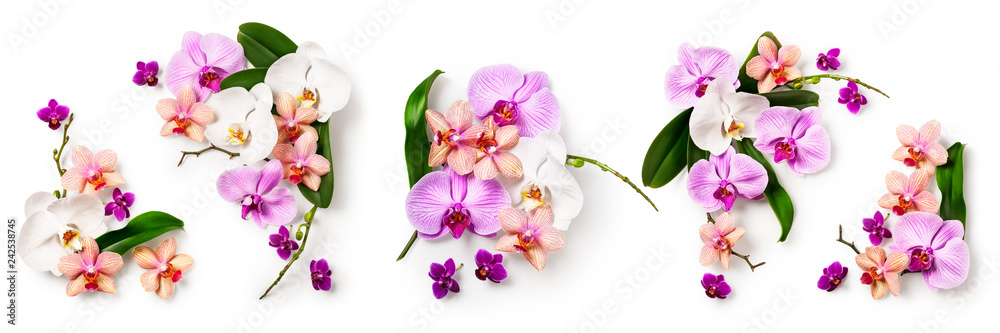 Fototapety, obrazy: Orchid flower set
