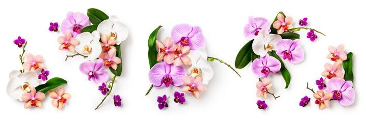 Fototapeta Storczyki Orchid flower set