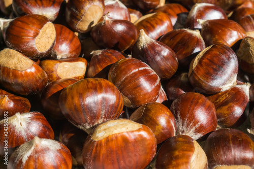 Ripe raw chestnuts close up. Fresh sweet chestnut. Castanea sativa top view. Food background for autumn