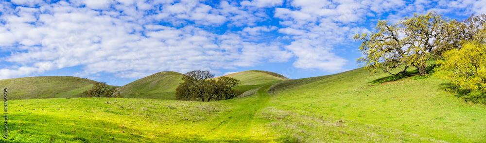 Fototapety, obrazy: Hiking trail through the verdant hills of south San Francisco bay area, San Jose, California
