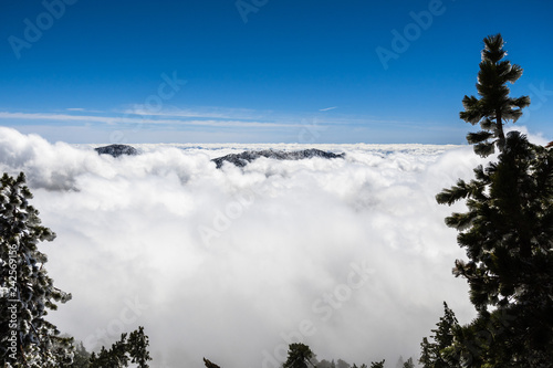 Sea of clouds and mountain ridge barely visible framed by frost covered evergree Canvas Print