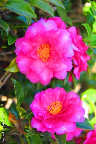 Foto op Canvas Roze 歩道の花の風景1