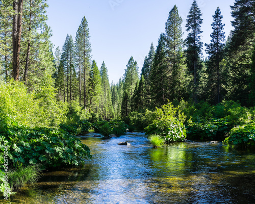 Wall Murals Forest river McCloud River flowing through Shasta National Forest, Siskiyou County, Northern California