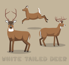 Deer White-tailed Cartoon Vector Illustration