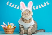 Funny Easter Bunny Cat, Cute With Ears And Easter Eggs. Easter Background And Composition