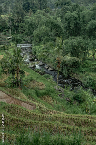 Tuinposter Wijngaard Magical Beauty and Serenity Abound in Bali