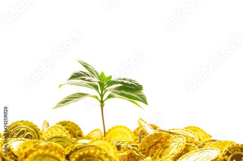 Fotografie, Obraz  新芽と金貨
