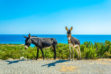 Wild Donkeys Are Waiting At Th...