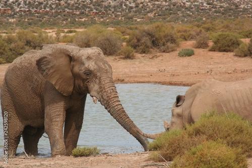 Photo  Elephant meets Rhino