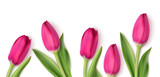 Fototapeta Tulipany - Decorative pink tulips isolated on white background. Spring design template with flowers. Vector illustration.