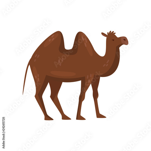 Fotomural Brown camel with two humps on the back, side view