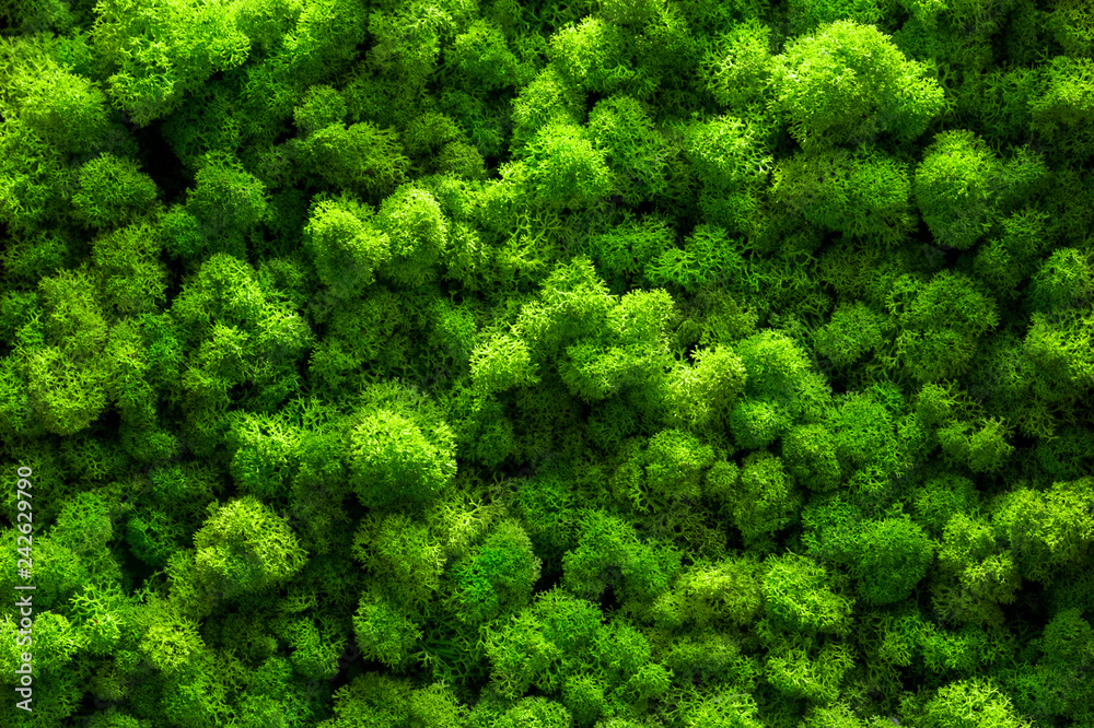 Fototapety, obrazy: Green moss on old office floor. interior design. top view close up