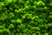 Green Moss On Old Office Floor. Interior Design. Top View Close Up