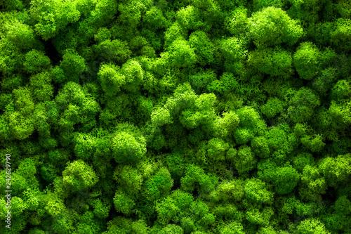 zielony-mech-na-starej-biurowej-podloga-projektowanie-wnetrz-widok-z-gory-z-bliska