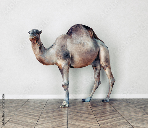 the camel in the room.